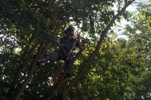 Photo #6: Powell & Sons. Tree Services