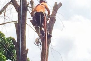 Photo #5: Powell & Sons. Tree Services