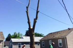 Photo #3: Powell & Sons. Tree Services