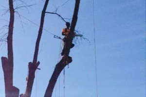 Photo #2: Powell & Sons. Tree Services