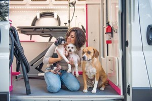 Photo #7: MOBILE DOG GROOMING/ Holiday Discounts!!
