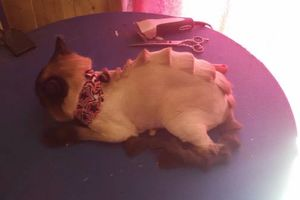 Photo #4: Experienced groomer