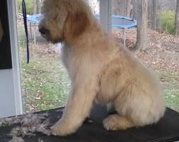 Photo #1: Experienced groomer