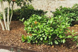 Photo #8: Winter Landscaping & Clean-up