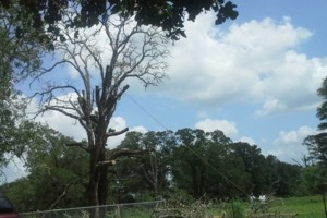 Photo #1: JARAMILLO TREE SERVICE