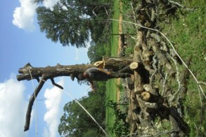 Photo #2: JARAMILLO TREE SERVICE
