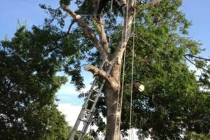 Photo #3: JARAMILLO TREE SERVICE