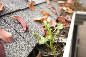 Photo #1: GUTTER CLEANING - REPAIR - LEAF REMOVAL