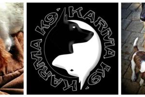Photo #1: Karma K9. Dog Training, Daycare & Aquatic Services