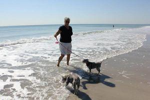 Photo #1: Dog sitter/ walker