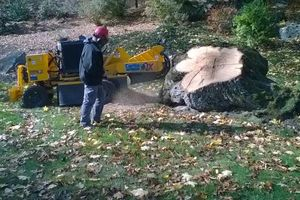 Photo #1: Stump grinding and Tree work. Lowest prices around!