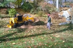 Photo #2: Stump grinding and Tree work. Lowest prices around!