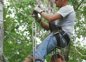 Photo #1: Precision 1 Tree Service. Safety is always first!