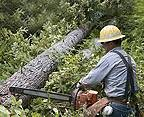 Photo #3: Precision 1 Tree Service. Safety is always first!