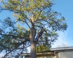 Photo #8: Keys and Sons. Tree Removal