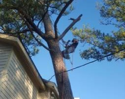 Photo #7: Keys and Sons. Tree Removal