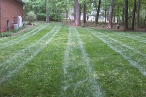 Photo #16: The Lawn Chaser (Quality Lawn and Leaf Clean Up Services)
