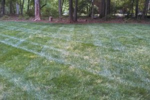 Photo #15: The Lawn Chaser (Quality Lawn and Leaf Clean Up Services)