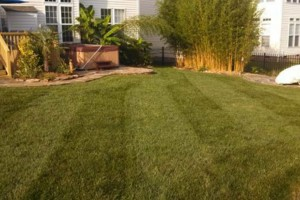 Photo #12: The Lawn Chaser (Quality Lawn and Leaf Clean Up Services)