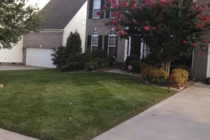 Photo #11: The Lawn Chaser (Quality Lawn and Leaf Clean Up Services)