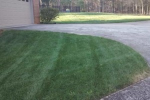 Photo #5: The Lawn Chaser (Quality Lawn and Leaf Clean Up Services)