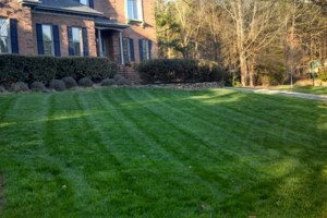 Photo #2: The Lawn Chaser (Quality Lawn and Leaf Clean Up Services)
