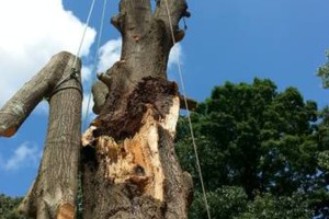 Photo #6: Combs' tree service. FREE ESTIMATES