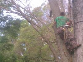 Photo #4: Combs' tree service. FREE ESTIMATES