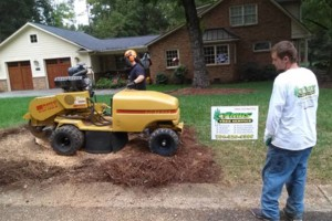 Photo #2: Combs' tree service. FREE ESTIMATES