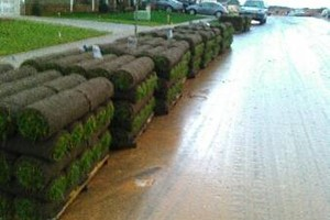 Photo #7: LANDSCAPING, SOD, TREE REMOVAL, MOWING, PRESSURE WASHING...