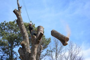 Photo #6: ANY TREE, ANY PLACE, We take them down SAFE. COMBS TREE SERVICE
