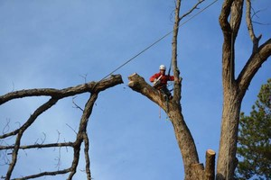 Photo #4: ANY TREE, ANY PLACE, We take them down SAFE. COMBS TREE SERVICE