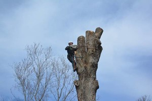 Photo #2: ANY TREE, ANY PLACE, We take them down SAFE. COMBS TREE SERVICE