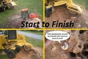 Photo #1: Denton's STUMP GRINDING AND REMOVAL