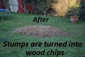 Photo #6: Denton's STUMP GRINDING AND REMOVAL