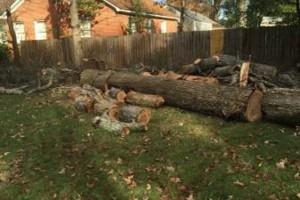 Photo #2: Jose's tree service