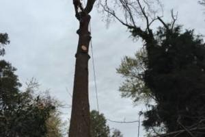 Photo #1: Jose's tree service