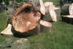 Photo #4: Fire wood sale - seasoned good and dry for fast burning - $80.00 for a f150 load!