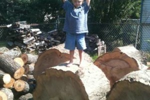 Photo #5: Fire wood sale - seasoned good and dry for fast burning - $80.00 for a f150 load!