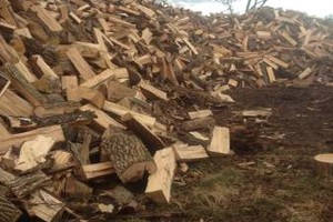 Photo #1: HOOVERS TREE SERVICE/ FIRE WOOD - ASH, OAK, HICKORY, MAPLE