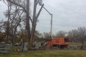 Photo #2: HOOVERS TREE SERVICE/ FIRE WOOD - ASH, OAK, HICKORY, MAPLE