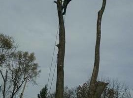 Photo #3: Professional tree trimming and takedown (Columbus and surrounding area)