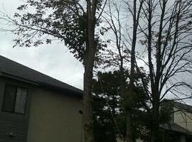 Photo #2: Professional tree trimming and takedown (Columbus and surrounding area)