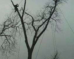 Photo #1: Tree Removal Service.  Skinner Expert