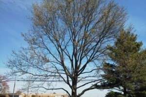 Photo #2: 10% off special!! GREAT DANE TREE EXPERTS, LLC