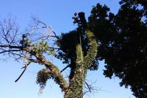 Photo #1: 10% off special!! GREAT DANE TREE EXPERTS, LLC