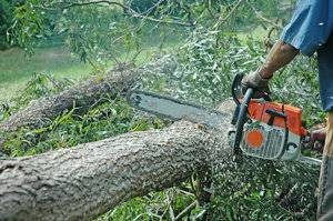 Photo #3: Affordable Tree services and Stump Grinding