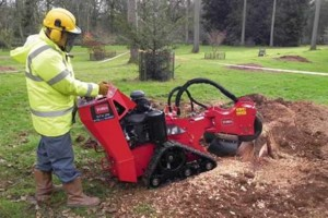 Photo #2: Affordable Tree services and Stump Grinding