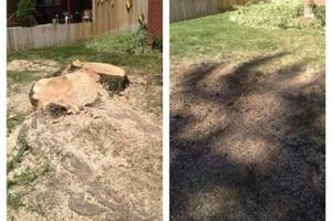 Photo #1: Affordable Tree services and Stump Grinding