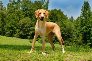 Photo #17: OPEN FOR THE NEW YEAR! FIVE STAR LICENSED DOG BOARDING! Loving PUP